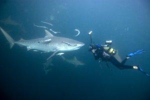 parvin-underwater